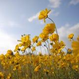 красивейшие цветки придают квадратную форму одичалому желтому цвету Стоковые Изображения RF