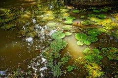 Красивейшие цветки пусковых площадок лилии и пусковой площадки лилии Стоковые Изображения