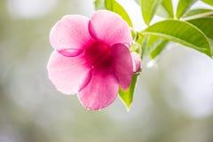 красивейшие цветки свежие Стоковые Фотографии RF