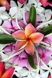 красивейшие цветки тропические стоковое изображение rf