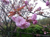 красивейшие цветки стоковое фото
