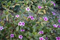 красивейшие цветки Стоковое фото RF
