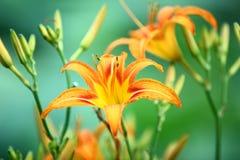 красивейшие цветки стоковые фотографии rf