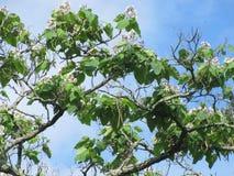 красивейшие цветки Стоковая Фотография RF