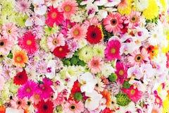 красивейшие цветки Стоковые Фото