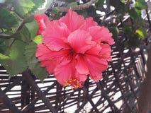 красивейшие цветки Стоковая Фотография