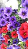красивейшие цветы Стоковое фото RF
