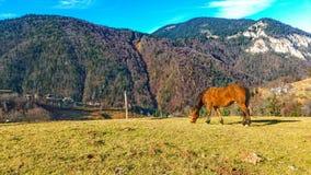 Красивейший ландшафт с лошадью и голубым небом Стоковая Фотография RF