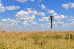 Запас лотка Nxai, Ботсвана Стоковое Изображение