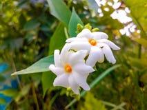 Красивейший белый цветок стоковая фотография