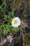 Красивейший белый цветок Стоковые Изображения RF