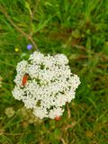 Красивейший белый цветок Стоковые Фотографии RF