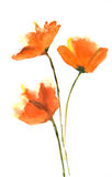 красивейший близкий тюльпан цветка вверх Стоковое Изображение