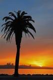 красивейший вал захода солнца силуэта ладони Стоковые Фотографии RF