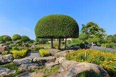 красивейший вал сада карлика Стоковые Изображения RF