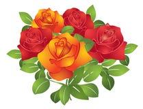 красивейший вектор роз померанцового красного цвета цветков Стоковое фото RF