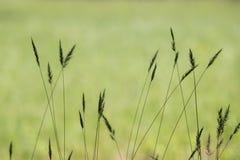 красивейший вектор силуэта лужка травы Стоковое Изображение RF