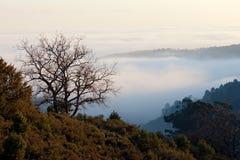 красивейший взгляд моря облаков Стоковое Фото