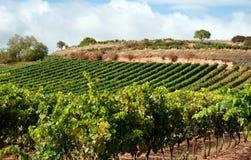 красивейший винзавод Испании Стоковые Фото