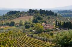красивейший виноградник Италии Стоковое фото RF