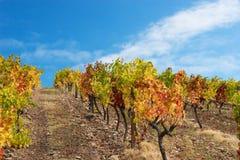 красивейший виноградник ландшафта Стоковое Изображение