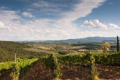 красивейший виноградник Италии Стоковые Фотографии RF