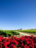красивейший виноградник Стоковое Изображение