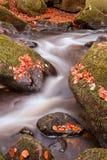 Красивейший водопад пропуская через landscap падения осени живой Стоковое Изображение