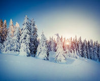 Красивейший восход солнца зимы в горах Стоковые Изображения RF