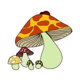 Красивейший гриб colur Стоковые Фото