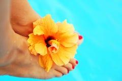 красивейший женский бассеин ног Стоковые Фотографии RF