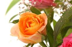 красивейший желтый цвет розы Стоковое Изображение