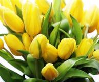 красивейший желтый цвет тюльпанов букета Стоковая Фотография RF