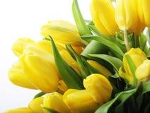 красивейший желтый цвет тюльпанов букета Стоковые Фото