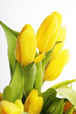 красивейший желтый цвет тюльпанов букета Стоковое Изображение RF