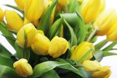 красивейший желтый цвет тюльпанов букета Стоковые Изображения RF