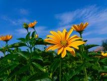 красивейший желтый цвет цветка Стоковое Фото