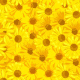 красивейший желтый цвет цветков вектор детального чертежа предпосылки флористический Стоковые Изображения