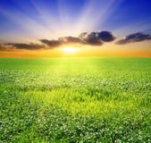 красивейший заход солнца зеленого цвета поля Стоковая Фотография