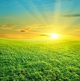 красивейший заход солнца зеленого цвета поля Стоковое Фото