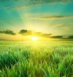 красивейший заход солнца зеленого цвета поля Стоковое Изображение