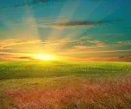 красивейший заход солнца зеленого цвета поля Стоковое фото RF