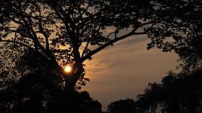 Красивейший заход солнца с деревьями Стоковое Изображение
