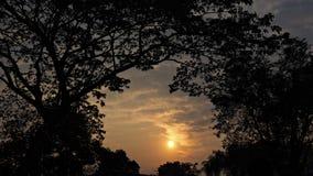 Красивейший заход солнца с деревьями Стоковая Фотография