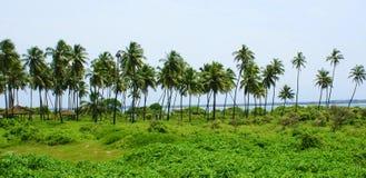 красивейший зеленый ландшафт Стоковое Изображение