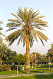 Красивейший зеленый сад изолированная принципиальной схемой белизна природы Стоковая Фотография RF