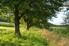 красивейший зеленый цвет сельской местности Стоковые Изображения RF