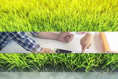 красивейший зеленый цвет травы Стоковые Фото