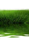 красивейший зеленый цвет травы Стоковые Фотографии RF