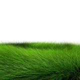 красивейший зеленый цвет травы Стоковая Фотография RF